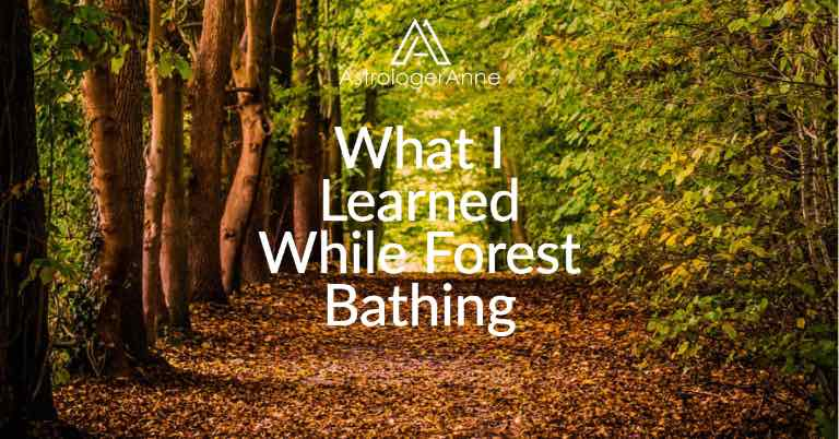 What I learned while forest bathing - forest photo